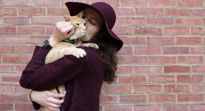 Benefits of Using Apple Cider Vinegar Cat