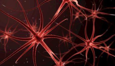 biofeedback vs neurofeedback