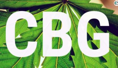 benefits of CBG