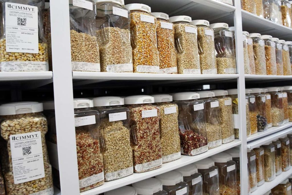 What Is A Seed Bank